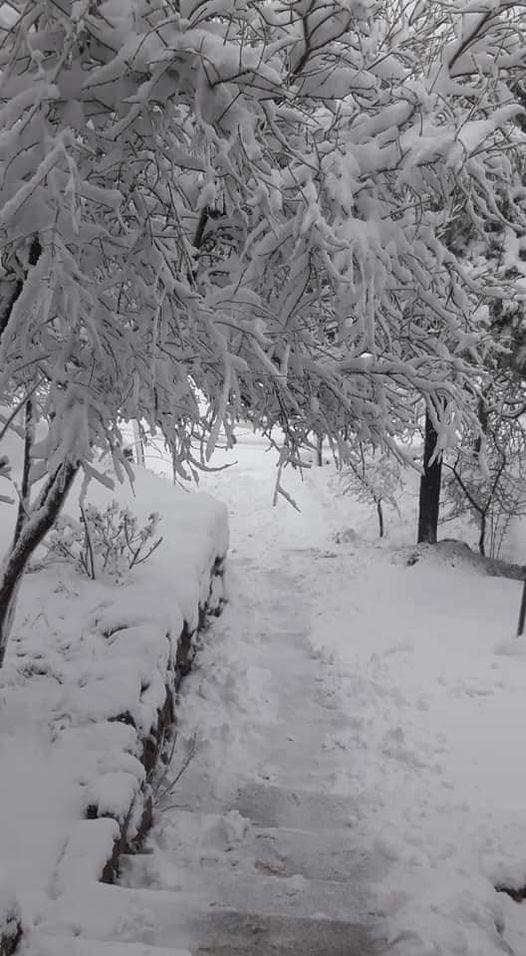 ثلوج تغطى الاشجار