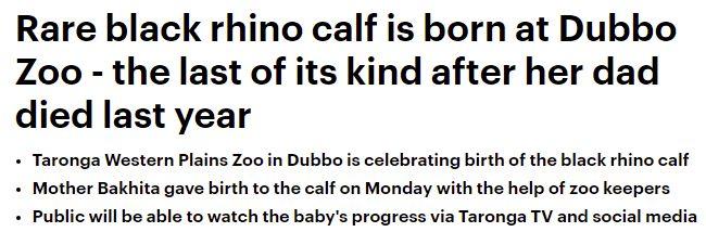 ولادة وحيد قرن من الفصائل المهددة بالانقراض