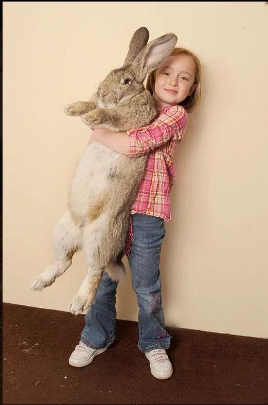 فيديو.. سرقة أضخم أرنب في العالم !