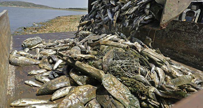 نفوق أسماك لبنان