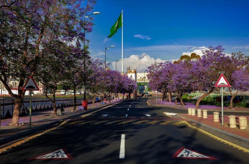 أمانة عسير: وفق توجيهات سمو ولي العهد زراعة ٢٥ ألف شجرة للجاكراندا في مدينة أبها