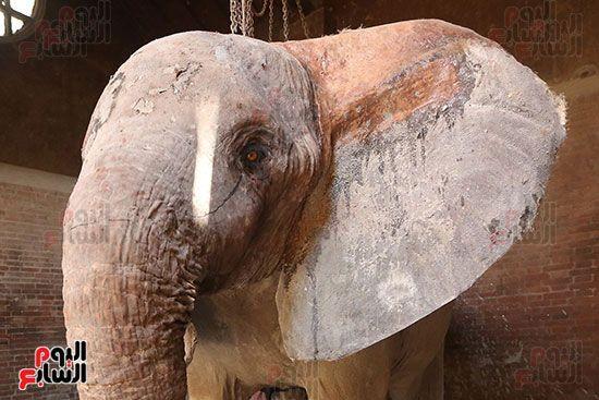 الفيلة نعيمة (5)