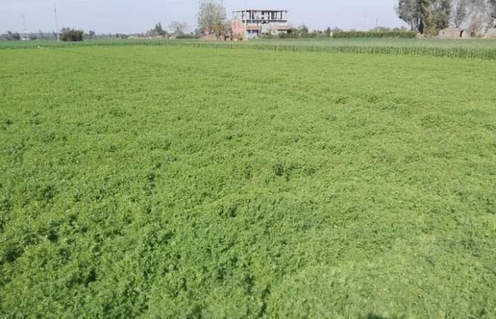 وزارة الزراعة تنظم حملة قومية لزيادة إنتاج الفول والعدس.. صور