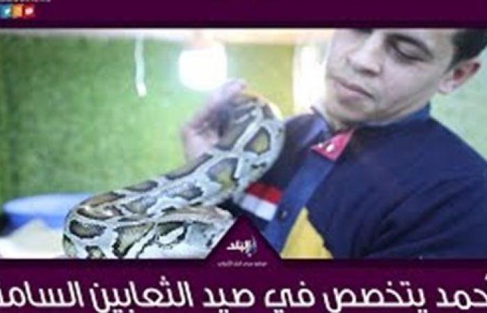 الكوبرا والأفعى المقرنة.. أحمد يتخصص في صيد الثعابين السامة