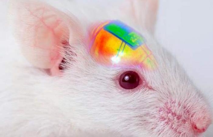 غرسة دماغية بمصابيح LED تقنية كورية للسيطرة على المزاج