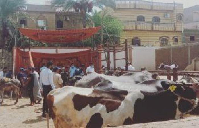 الزراعة: برامج توعوية لنشر ثقافة التلقيح الاصطناعى لزيادة إنتاج اللحوم والألبان