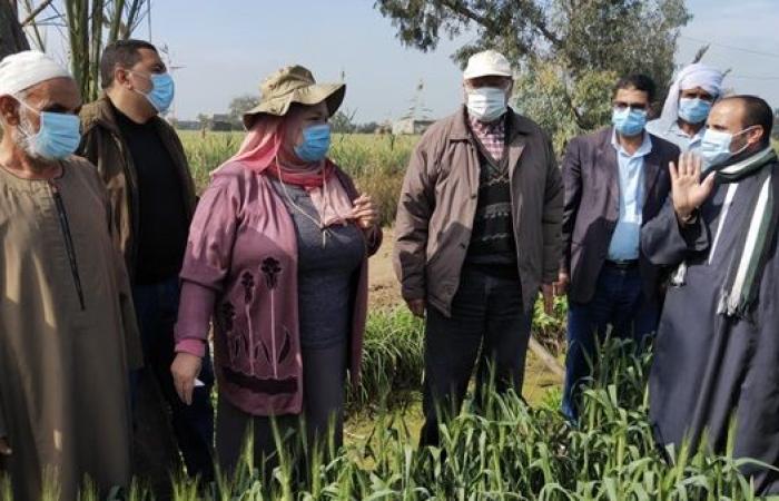 وزارة الزراعة: تخصيص 329 ألف فدان لزراعة القمح في محافظة البحيرة
