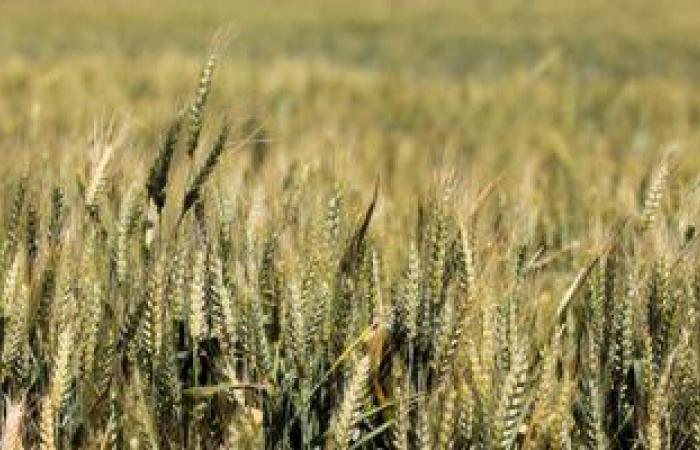 توصيات مهمة للمزارعين لتجنب الآثار السلبية للطقس المتقلب وهطول الأمطار