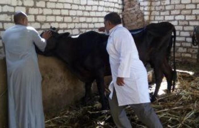 الجيزة تطلق الحملة القومية لتحصين الماشية ضد الحمى القلاعية والوادى المتصدع