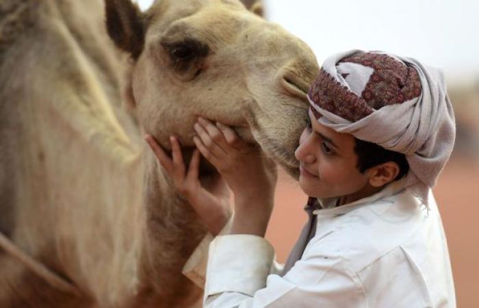 هيئة الغذاء السعودية توضح أفضل طرق تناول حليب الإبل... فيديو