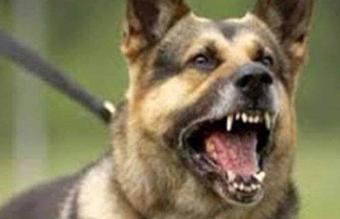 هجوم مروع.. كلب حراسة يهاجم طفلتين في شارع عام   فيديو وصور