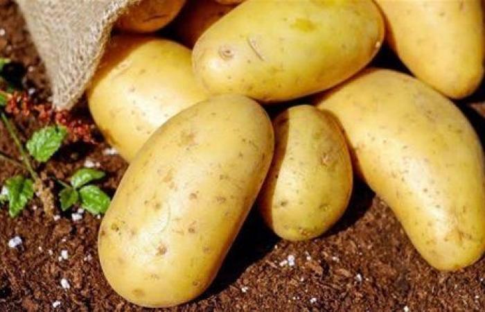 بعد خسائر الفلاحين.. تحذيرات عاجلة من الزراعة بشأن محصول البطاطس