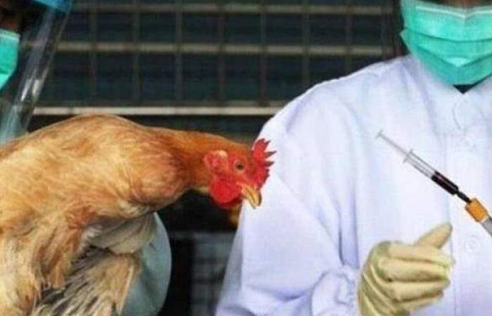 نفوق 50 ألف طائر.. دولة عربية تكتشف بؤرة لسلالة إنفلونزا الطيور