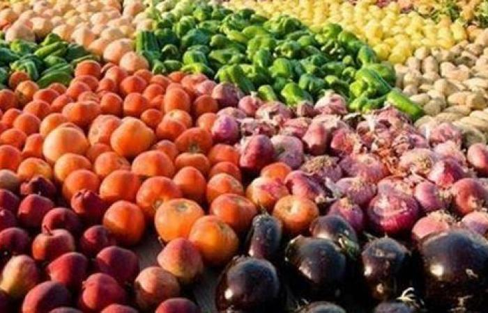 الموالح الأولى.. تصدير 176 ألف طن من المنتجات الزراعية خلال أسبوعين