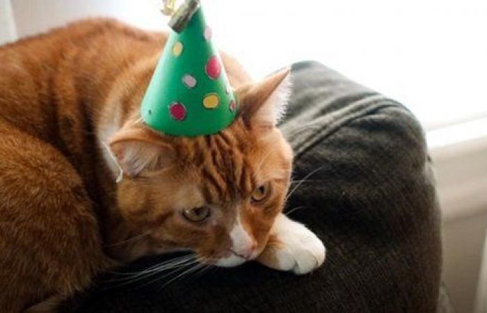 بسبب اسم قطة.. جدال حاد بين شقيقتين توأم ينتهي بمفأجاة .. صور