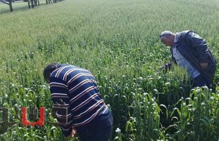 """""""زراعة الشرقية"""": جولات مستمرة لتفقد الصوب الزراعية   صور"""