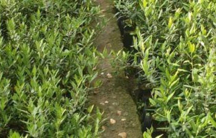 وزارة الزراعة تعلن فحص 366 رسالة تقاوى مستوردة و75 عينة نباتية