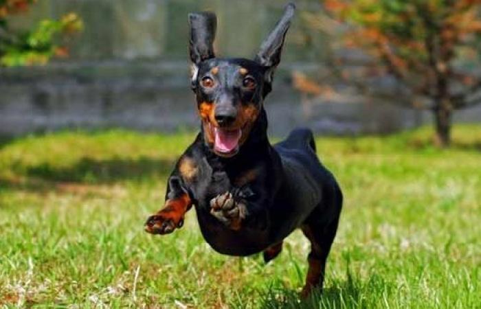 حقائق شيقة عن الكلاب وسلوكها.. تعرف عليها