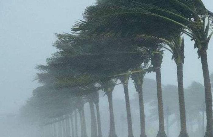 عاصفة القرش تقترب.. التنمية المحلية تحذر: ابتعدوا عن الأعمدة والأشجار