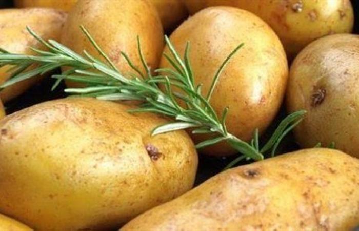 بسبب برودة الطقس.. نصائح للتعامل مع تلون أوراق البطاطس