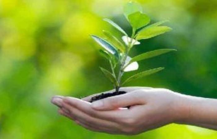 مصر أول دولة بالشرق الأوسط وشمال إفريقيا تصدر السندات الخضراء بعد التعافى البيئى