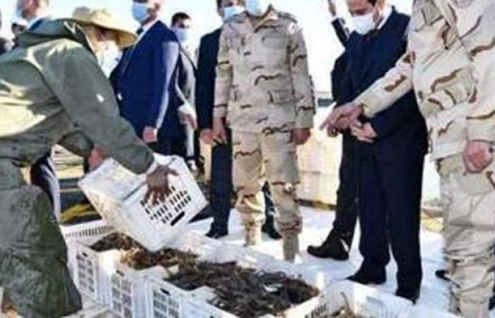 مستجدات دعم الصيادين.. السيسي يكلف بحمايتهم وإمدادهم بالمستلزمات والمعدات