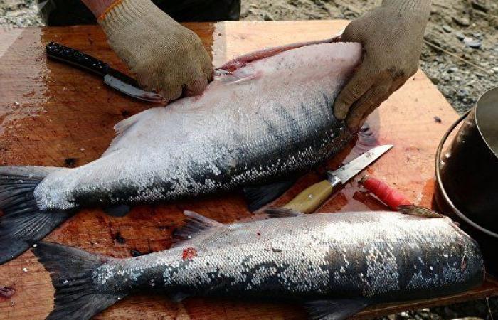 """""""لا يوجد مصل للشفاء منها""""... مصر تحذر من تناول سمكة منتشرة في الأسواق"""