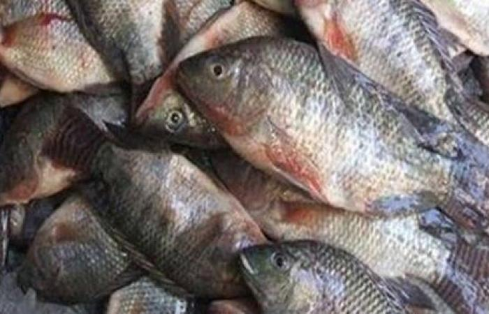 ضبط طن أسماك مجمدة فاسدة بالشرقية