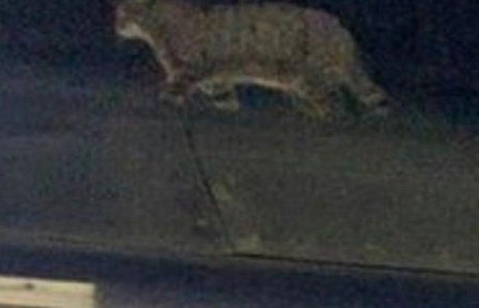 بسبعة أرواح.. ركاب قطار ينقذون قطة من الموت في اللحظات الأخيرة.. شاهد