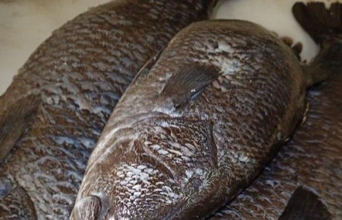 الخرج: مصادرة 111.5 كيلو من الأسماك والروبيان