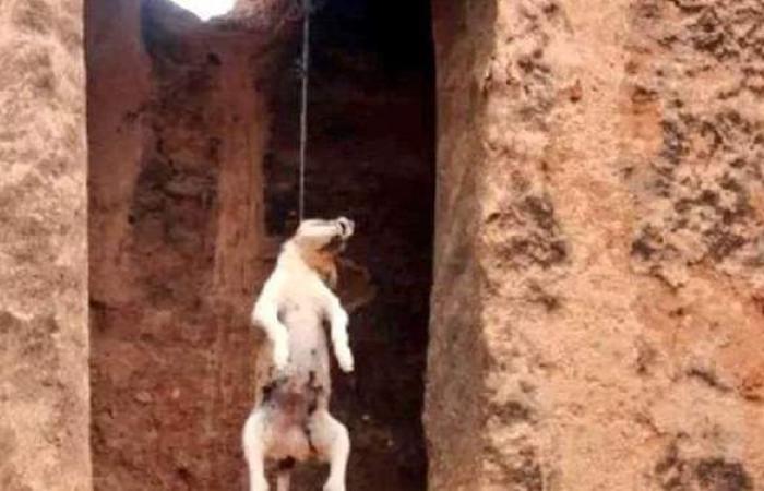 شنقه بالحبل.. القبض على حارس عقار عذب كلبا حتى الموت بالمقطم