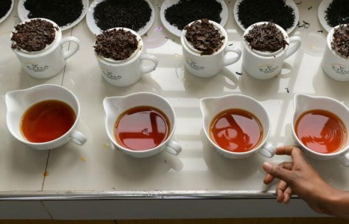 خبراء تغذية يكشفون أفضل أنواع الشاي للتخلص من سموم الجسم