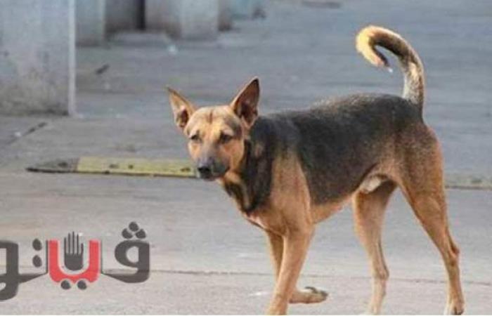 أحدهم حالتها خطيرة.. كلب ضال يعقر 12 طفلا في قريتين بمركز إهناسيا ببني سويف