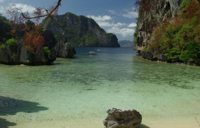 الفلبين... العثور على أصداف بحرية عملاقة بقيمة 25 مليون دولار
