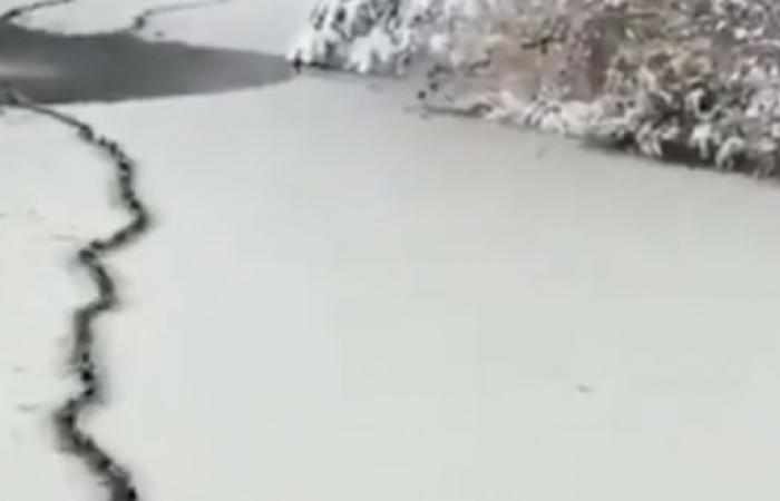 سرب من البط يسبح بانضباط وسط مياه متجمدة