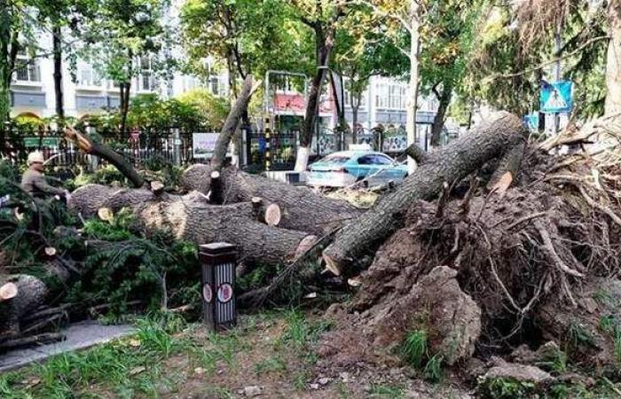 مصرع 11 شخصا وانهيار مبان وأشجار في رياح شديدة شرق الصين   فيديو