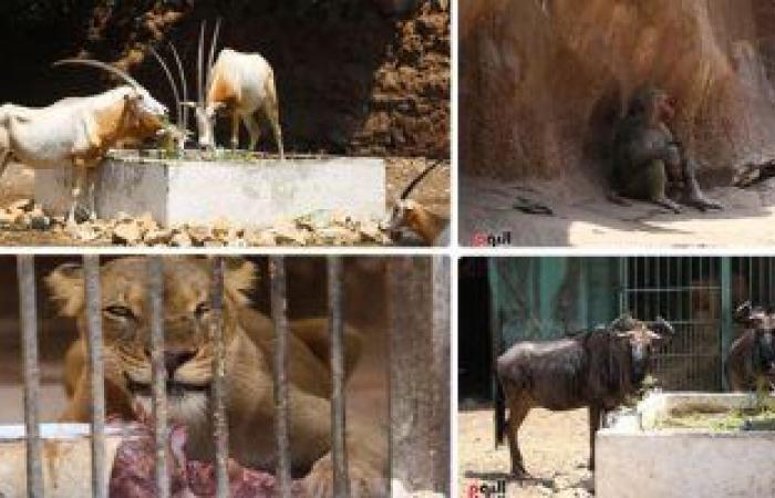 الزراعة: إغلاق حدائق الحيوان والأورمان والأسماك في شم النسيم لمنع انتشار كورونا