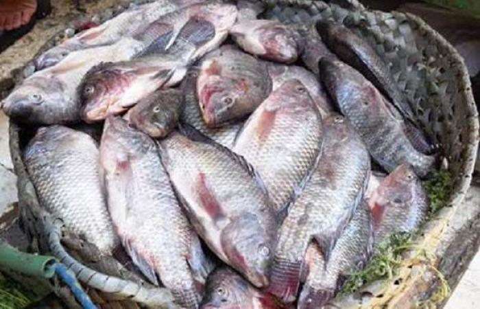 بمناسبة شم النسيم.. قائمة المحافظات الأكثر إنتاجاً للأسماك