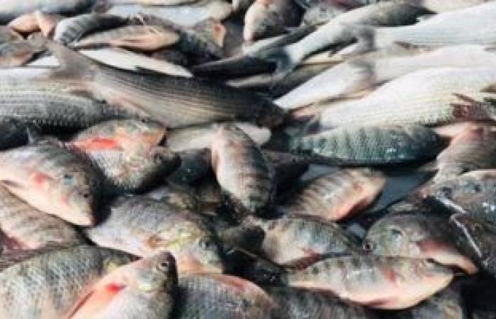 توقعات بارتفاع الطلب على الأسماك فى عيد الفطر.. تعرف على متوسطات الأسعار