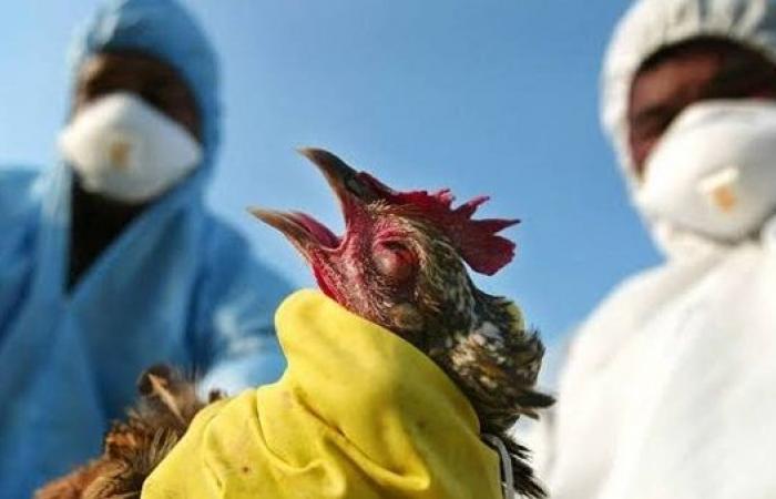 H10N3 | الصين تعلن تسجيل أول إصابة بشرية فى العالم بأنفلونزا الطيور