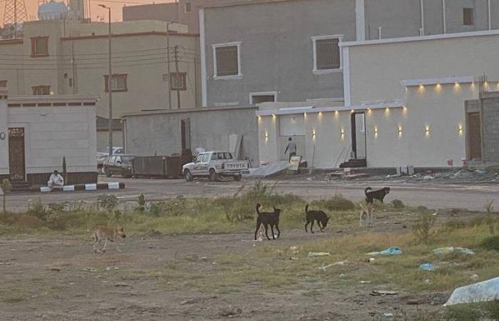 كلاب ضالة في «ابن سهو» تثير حيرة السكان