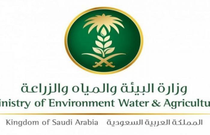 لائحة إدارة البيئة البحرية والساحلية تحدد مسؤوليات 3 مراكز وطنية
