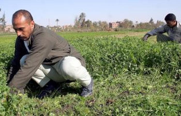 برنامج حكومي للتوسع في الزراعة على الأمطار.. اعرف عناصره وآليات التنفيذ
